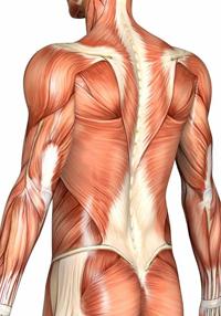 Νευρομυϊκό Μασάζ ή ΝΜΤ (Neuromuscular Massage Therapy)